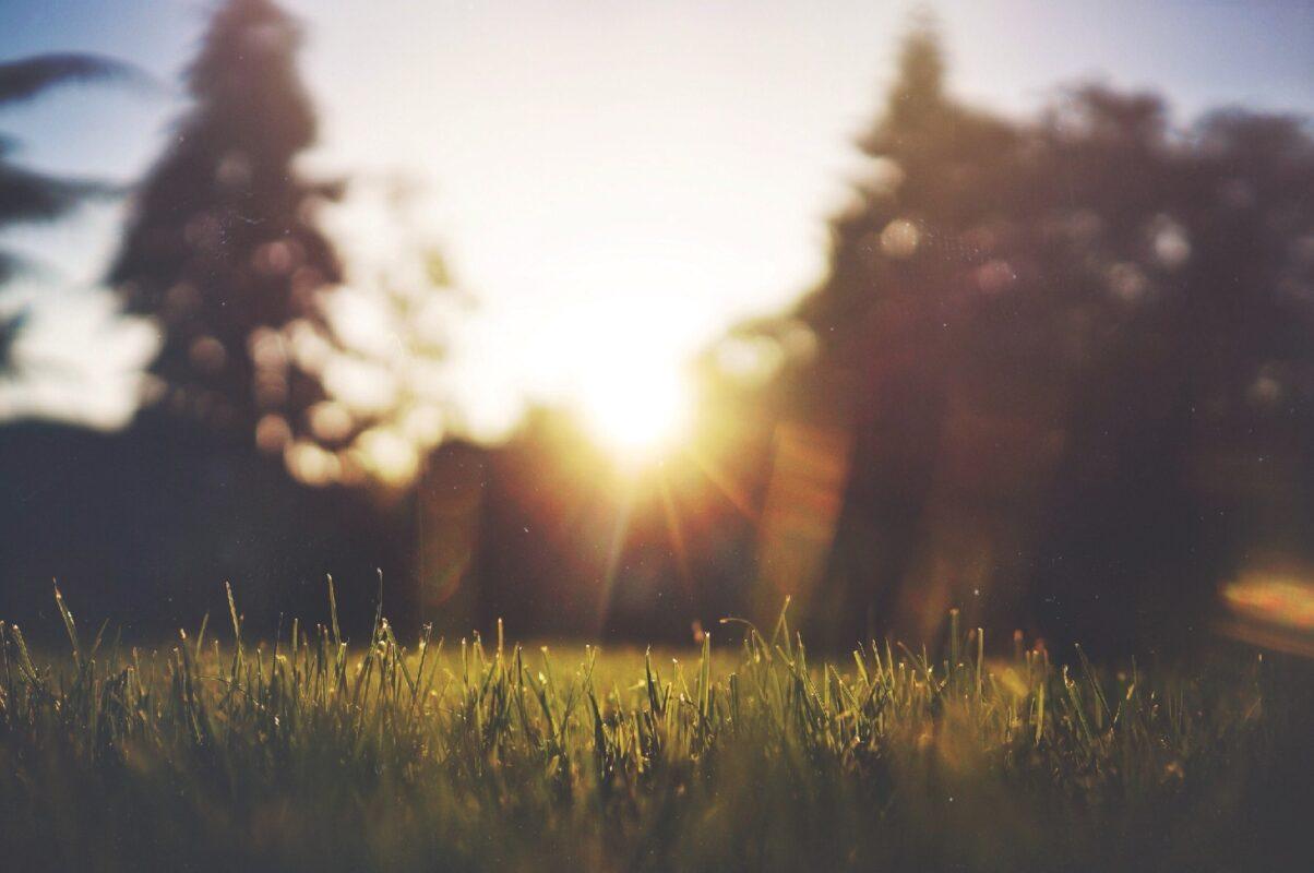 Matin, chaleur, soleil, canicule